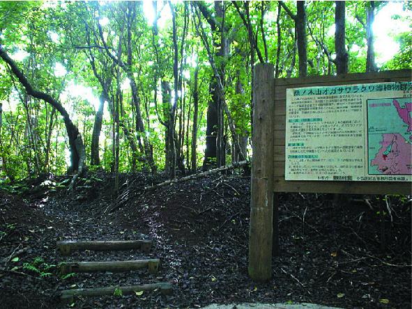 Mt. Kuwanokiyama